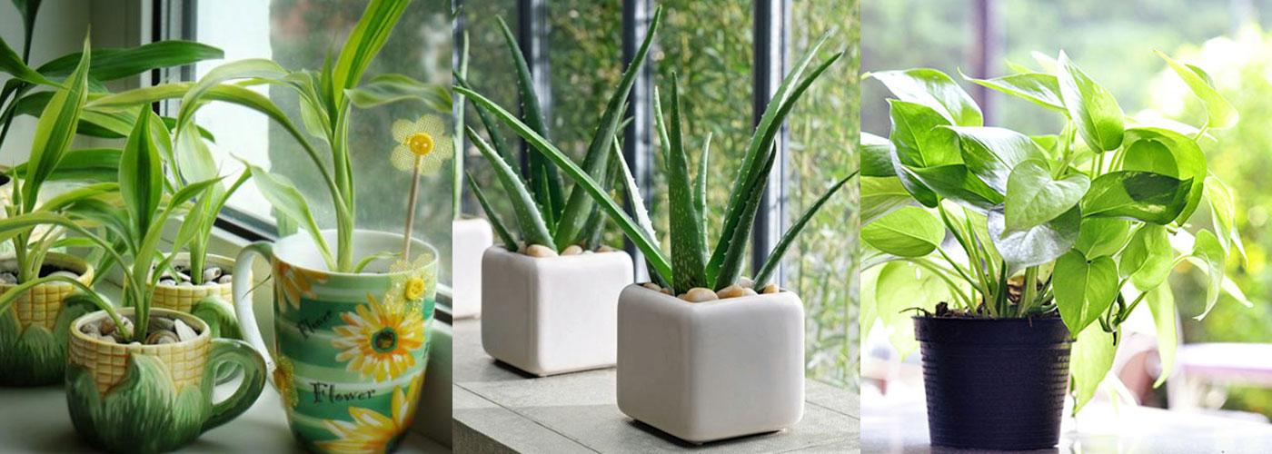 Freshening-Plants