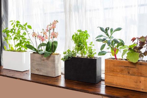 Balcony Vegetable Garden Ideas for Apartments , Indroyal